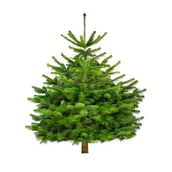 """Weihnachtsbaum """"Der schicke Maxim"""" 100-120 cm"""