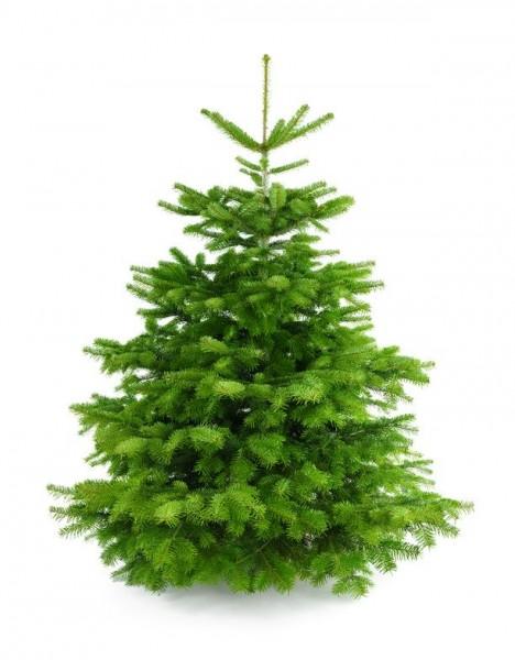 """Weihnachtsbaum """"Die charmante Anke"""" 180-200 cm"""
